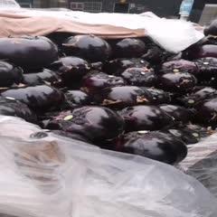 聊城紫光圆茄 聊城蔬菜基地,大量供应紫光园茄