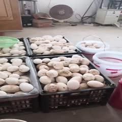 臨西縣 鵝蛋出售 就近可以送貨
