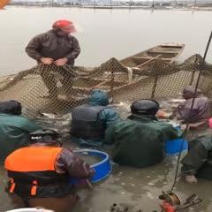 中山市东北鲫 人工养殖 0.25-1公斤