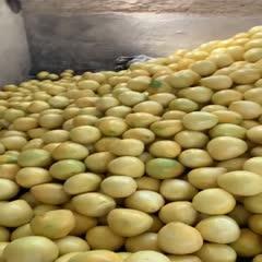 现货平和管溪红心柚子红肉蜜柚三红柚子新鲜水果当季整箱10斤