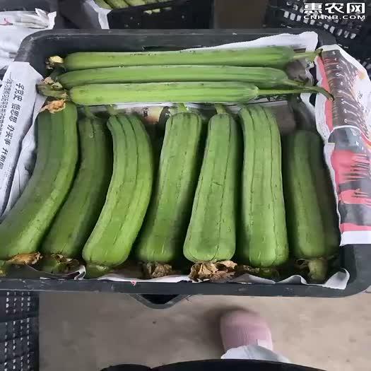 峨眉山精品肉丝瓜,可视频看货。支持线上交易。